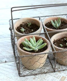 DIY Gardening Gift Ideas - Robert and Stevens Potters Basket with Succulents