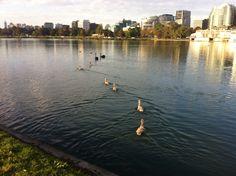 Albert Park Lake, Melbourne Victoria.