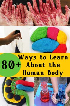 Learning about the Human Body is so much fun. Here are 80+ ways to learn about the human body.