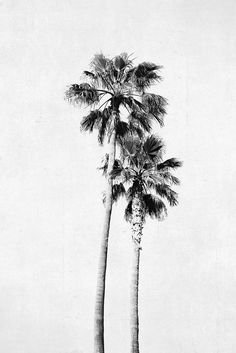 Palm Tree Photograph Vertical Print Black and White by BreeMadden