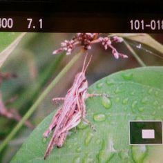Insectos del Parque La Esperanza Cataño Puerto Rico
