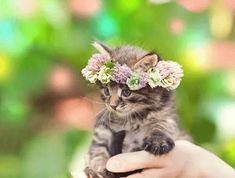 Kitten with a flower crown  60 Adorable Pet Photos To Brighten Your Day • BoredBug