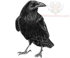 34 Best Crow Images In 2013 Crow Logo Crows Logos