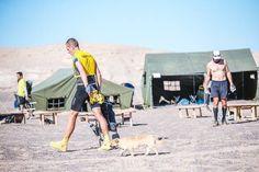 Marathin Runner Dion Leonard decided to adopt a stray dog who befriended him in the Gobi desert during the 4 Deserts race. The dog, named Gobi, ran alongside him for 125 km.