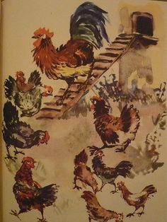 chickens  #chicken #chickens