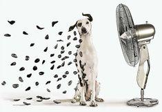 Spots / Petits points / Dalmatien / 101 Dalmatian / Dog / Cute / Noir et blanc / Black and White