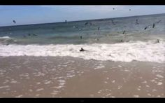 Footage Of Hundreds Of Sharks In A Feeding Frenzy On A North Carolina Beach
