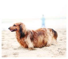 Sophie goes to the beach!