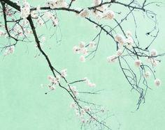 Cherry Blossom Tree Art Photograph Mint by KalstekPhotography