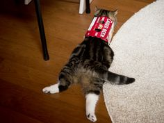Maru:[After all this box is comfortable.] 11/4, 2-1 私信