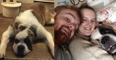 Après avoir passé près d'une décénnieà devoir se battre avec d'autres chiens pour manger, Boris a dû être amputé des oreilles. Avec un tel physique, il aurait pu ne jamais trouver d'adoptant. Et pourtant…