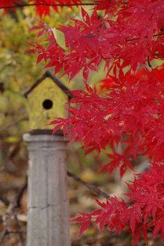 Birdhouse in fall