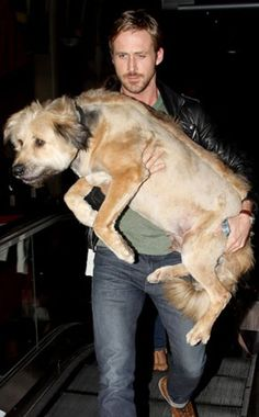 RYAN GOSLING  In case you had any doubts about Ryan's buffness, the actor puts them to rest by carrying his non-purse-dog George.