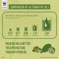 comparisons of alternative oils Rapeseed Oil, Palm Oil, Climate Change, Alternative, Learning, Studying, Teaching, Onderwijs
