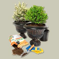 Replace tired annuals in patio containers with evergreens. Come spring, move them to the garden and refill pots with blooms.   Photo: Ted Morrison   thisoldhouse.com