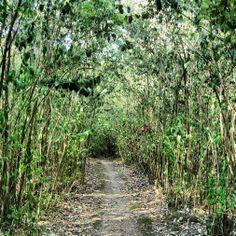 Caminito perdido, Parque, Florida, Uruguay