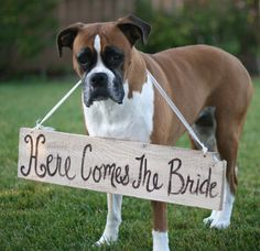 "Old barn wood hand painted ""Here Comes The Bride"" sign, for dogs"