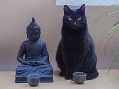 Медитация для Нейтрального ума