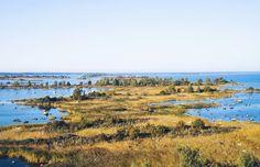 Näkymät Svedjehamnin näkötornista Merenkurkun maailmanperintökohteen moreeniselänteelle ja lopulta Ruotsiin. Kyllä koti Suomessa on monia hienoja luonto- ja retkikohteita tämä yksi niistä.  #ulkoilu #outdoors #retki #suomiretki #metsä #nature #luonto #maailmaperintökohde #svedjehamn #bodvattnet #vaasa #vasa #sea #meri #rannikko #vaellus #luontopolku #hillasblog #visitfinland #finland #vaellus