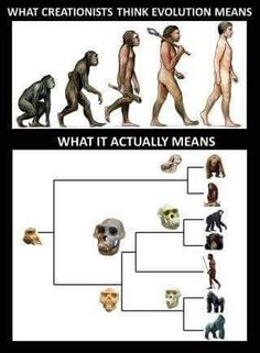 Real evolution meaning