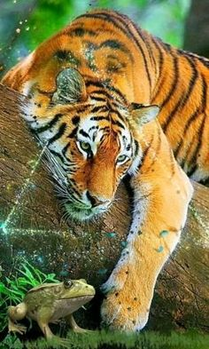 Nature Animals, Animals And Pets, Cute Animals, Wildlife Nature, Tiger Wallpaper, Animal Wallpaper, Beautiful Creatures, Animals Beautiful, Big Cats