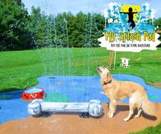 Our splash pads are for the Dogs Captain loves the Dog Bone feature for this splash pad. A splash pad does not have to be for children, a dog can keep cool and hydrated with a backyard water park. Backyard Water Parks, Dog Backyard, Backyard Water Feature, Backyard Ideas, Water Playground, Backyard Playground, Children Playground, Playground Ideas, Dog Spaces
