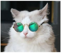 Wearing Glasses, Cat Eye Sunglasses, Cats, How To Wear, Fashion, Animals Images, Beautiful Pictures, Moda, Gatos