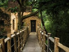 Lombház, melynek minden része igazolja: itt lakik a jó élet | Sokszínű vidék