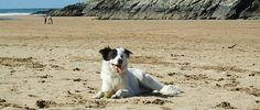 Treworgans Holiday Park, Cubert, Newquay, Cornwall, England. We only cater for couples and families and are located just a dog's walk away from 3 glorious beaches, as well as having many other great dog walking spots in close proximity to our holiday park. We want you to be able to bring your pet pooch on holiday with you. After all, why should they miss out on all the fun!