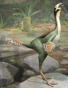 """Art illustration - Dinosaurs - Caudipteryx: (""""plumed tail"""") is a genus of theropod dinosaurs caudiptéridos, who lived in the early Cretaceous period, about 125 million years ago in the Barremian, in what is now Asia, they have feathers and are very similar to birds in their appearance general.1 Caudipteryx fossils were first discovered in the Yixian Formation of the Sihetun area in Liaoning province in northeast China in 1997."""