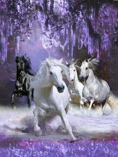 Photographic Print: Horses by Bob Langrish : Beautiful Horse Pictures, Most Beautiful Horses, Pretty Horses, Horse Love, Pretty Animals, Beautiful Gorgeous, Unicornios Wallpaper, Horse Wallpaper, Angel Wallpaper