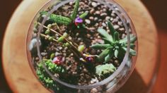 How To Plant A Terrarium: Want to know how to plant a terrarium? Here are the details and materials needed to get that gorgeous, lush terrarium on your bookshelf or coffee table!