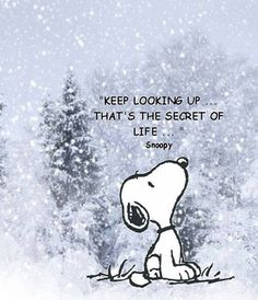 """Keep looking up...that's the secret of life."" -Snoopy #quote #wisdom"