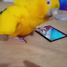 """spooky fer on Twitter: """"i wish this video never ended https://t.co/6J3U0zLccd"""""""