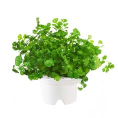 Coriander Refill, $17, now featured on Fab.