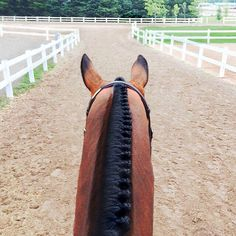 """two-strides-out: """"bitsnbows: """"Back at it this week (at Caledon Pan Am Equestrian Park) """" Dang """" Those braids are unfreaking real. Cute Horses, Horse Love, Horse Girl, Beautiful Horses, Horse Braiding, Equestrian Outfits, Horse Pictures, Horse Photography, Horse Tack"""