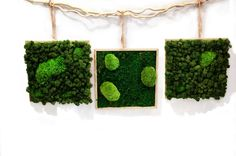 gallery Interior Design Living Room, Living Room Decor, Bedroom Decor, Moss Wall Art, Sustainable Design, Design Trends, Color Schemes, Planters, Walls