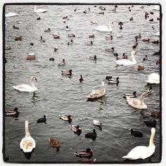 Good morning birds, from #stockholm with love #SwedenAR