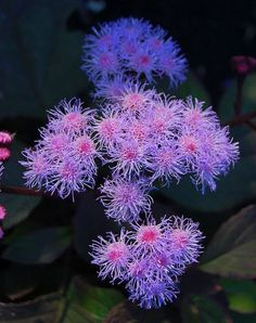 May Bloom Day Merriment - Far Out Flora Flower Texture, Greenhouse Plants, Sea Anemone, Cactus, Underwater World, Shade Plants, Lawn And Garden, Tropical Fish, Dream Garden