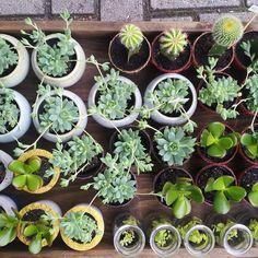 Já estamos nos preparando para o Mercado Criativo amanhã e domingo na @suiane_maria !  #succulents #cactus #plants #borealisplantas