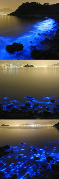 """Noctiluca scintillans, a species of bioluminescent plankton, illuminated a stretch of coastline near Hong Kong yesterday in a stunning display that was captured in long exposure photos by photographer Kin Cheung. Unfortunately, as The Atlantic reports, the glowing bloom is caused by farm pollution. The plankton is also known as """"Sea Sparkle."""""""