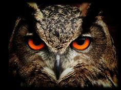 Intense owl invites us to use our intuition, and use it to see in the dark and through the unconscious to the Truth