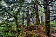 Wow! Like a fairy tale. Hoh rain forest, Olympic National Park in Washington State, USA  (by Dan Anderson.)