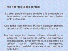 Caracteristicas y clasificacion de algas