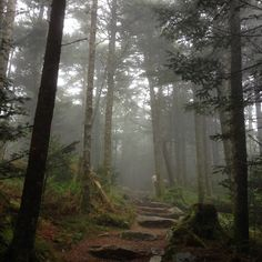 Deep Gap Trail, Mt Mitchell, NC  (Photo credit: Lisa Jacqueline Tucker in Hikers group)