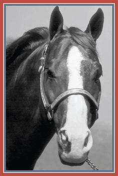 American Quarter Horse Hall of Fame & Museum: Peppy San Badger