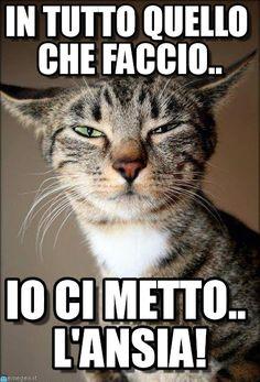 Gatto1 meme (http://www.memegen.it/meme/xhycth)