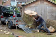 Roger Day saving Oak from Tree Surgery operations