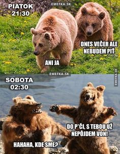 Medvědi jdou v pátek večer ven You Funny, Really Funny, Funny Jokes, Hilarious, Funny Things, Funny Stuff, Funny Images, Funny Pictures, Most Popular Memes