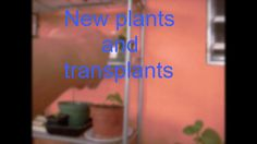 New plants and tranplants